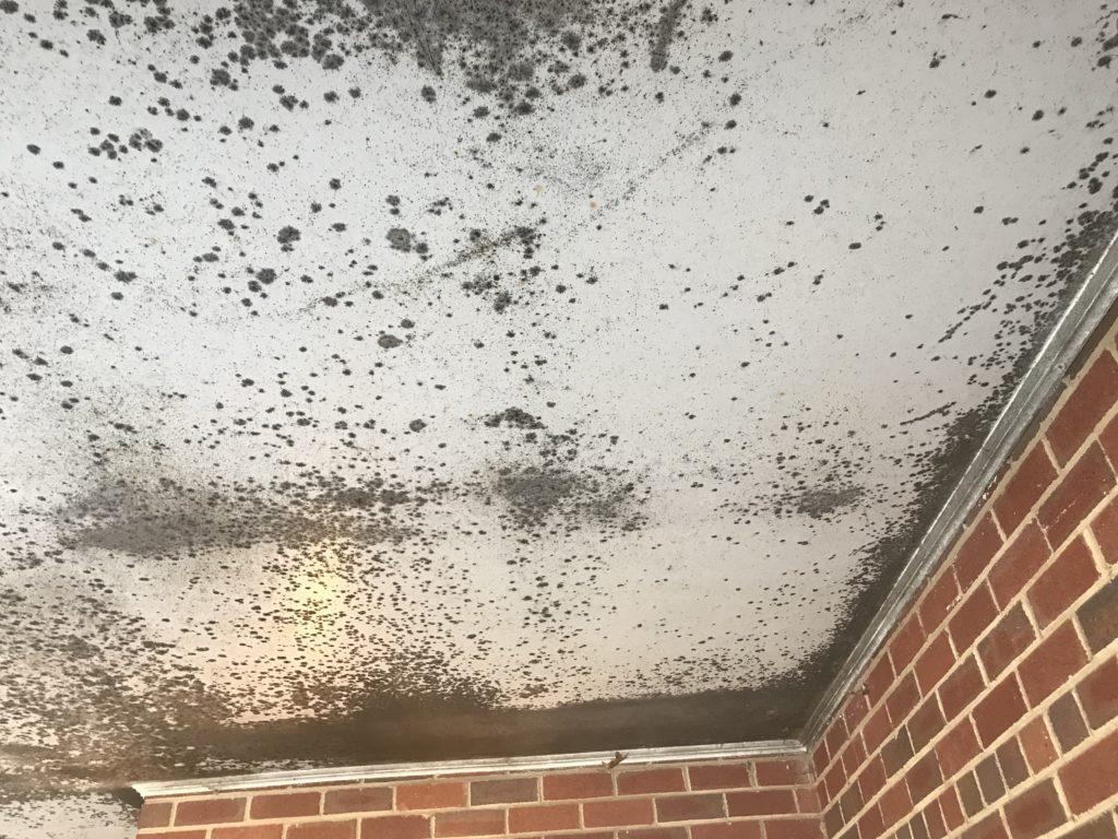 Mold Superior Damage Restoration